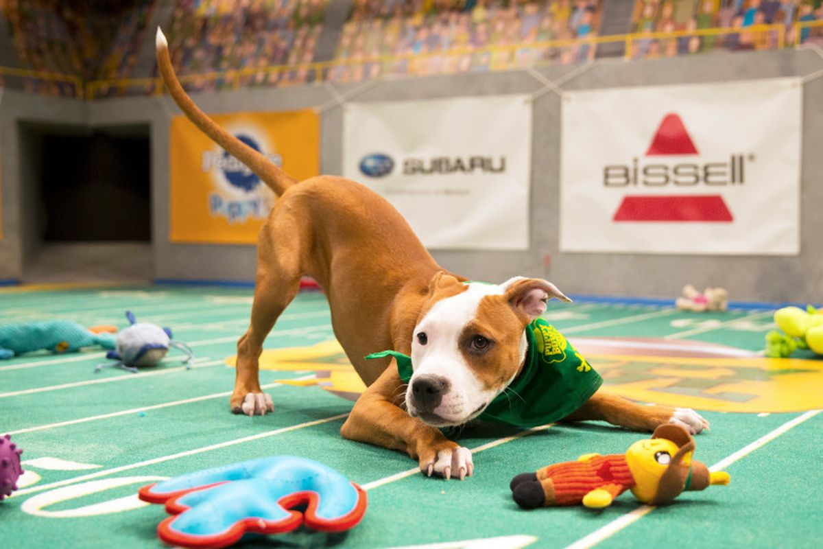 Animal Planet: Puppy Bowl [Returning Event]
